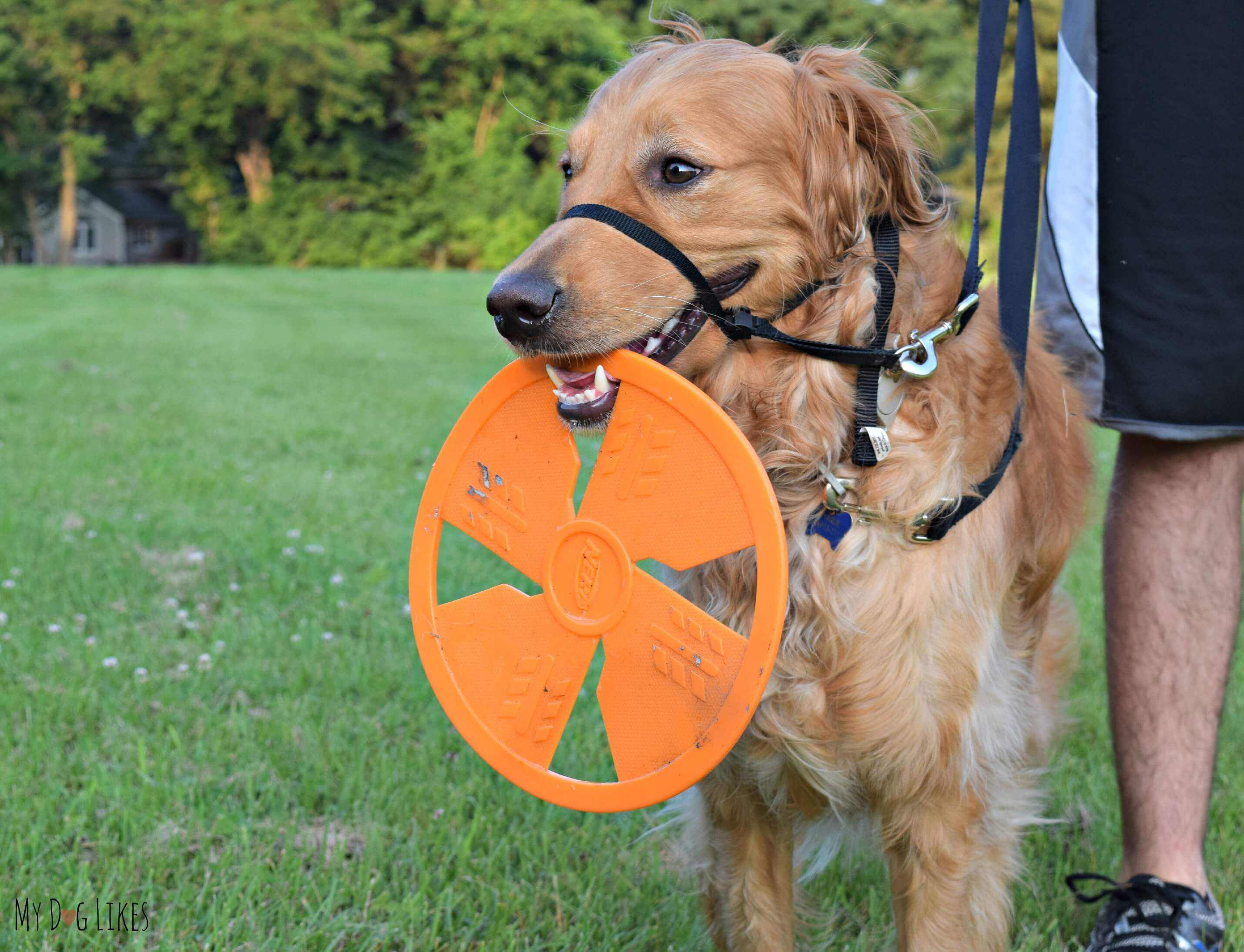 We Love That The Nerf Dog Flyer Is Easy For Charlie To Pick Up And Carry