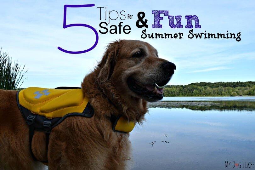 Dog Swimming Safety Tips from MyDogLikes
