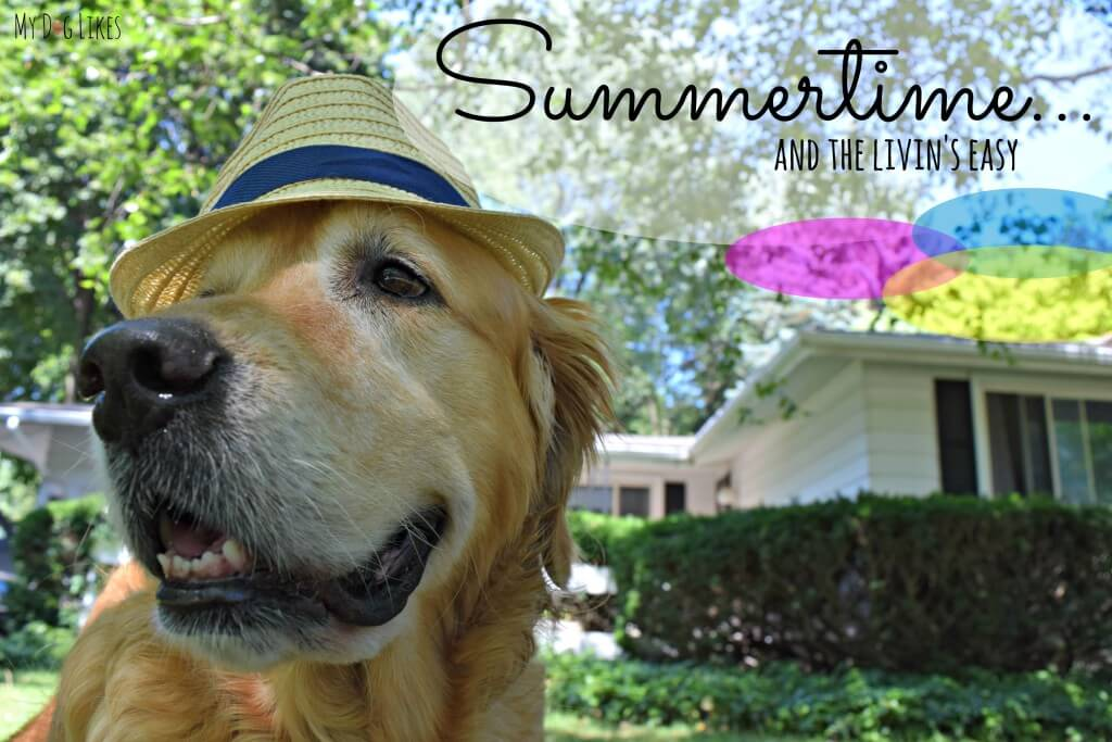 Here at MyDogLikes it's Summertime and the Livin is Easy! Check out our tips for safe summer pet fun!