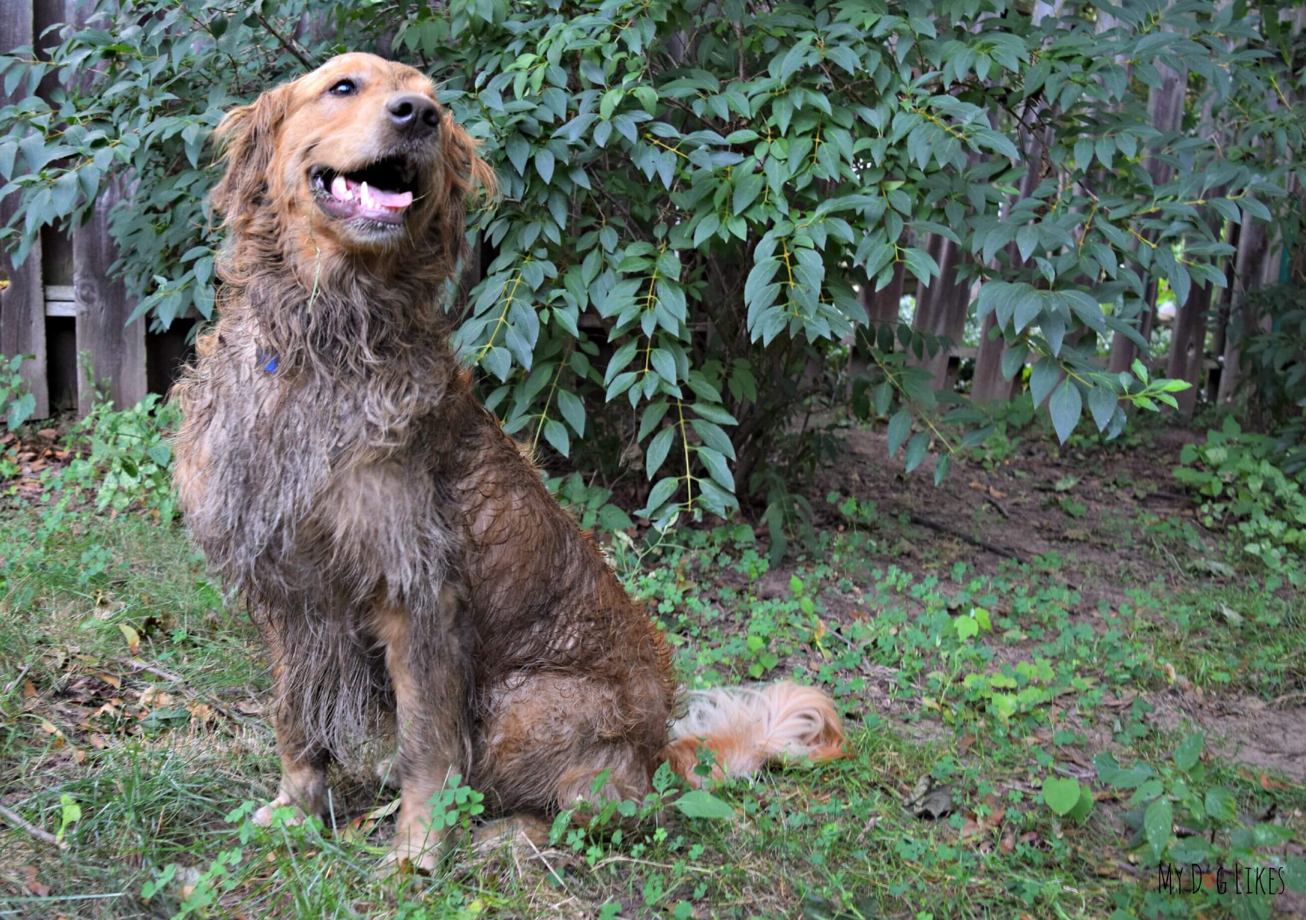 Wordless Wednesday Dirty Devious Dog