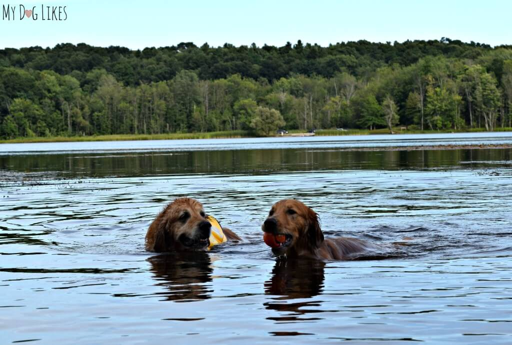 Looking for a dog friendly park near Rochester, NY? Mendon Ponds Park is one of our all time favorites!