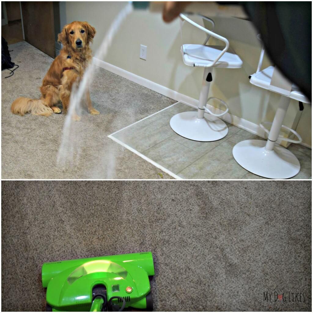 Testing out PL360's Pet Safe Carpet Powder