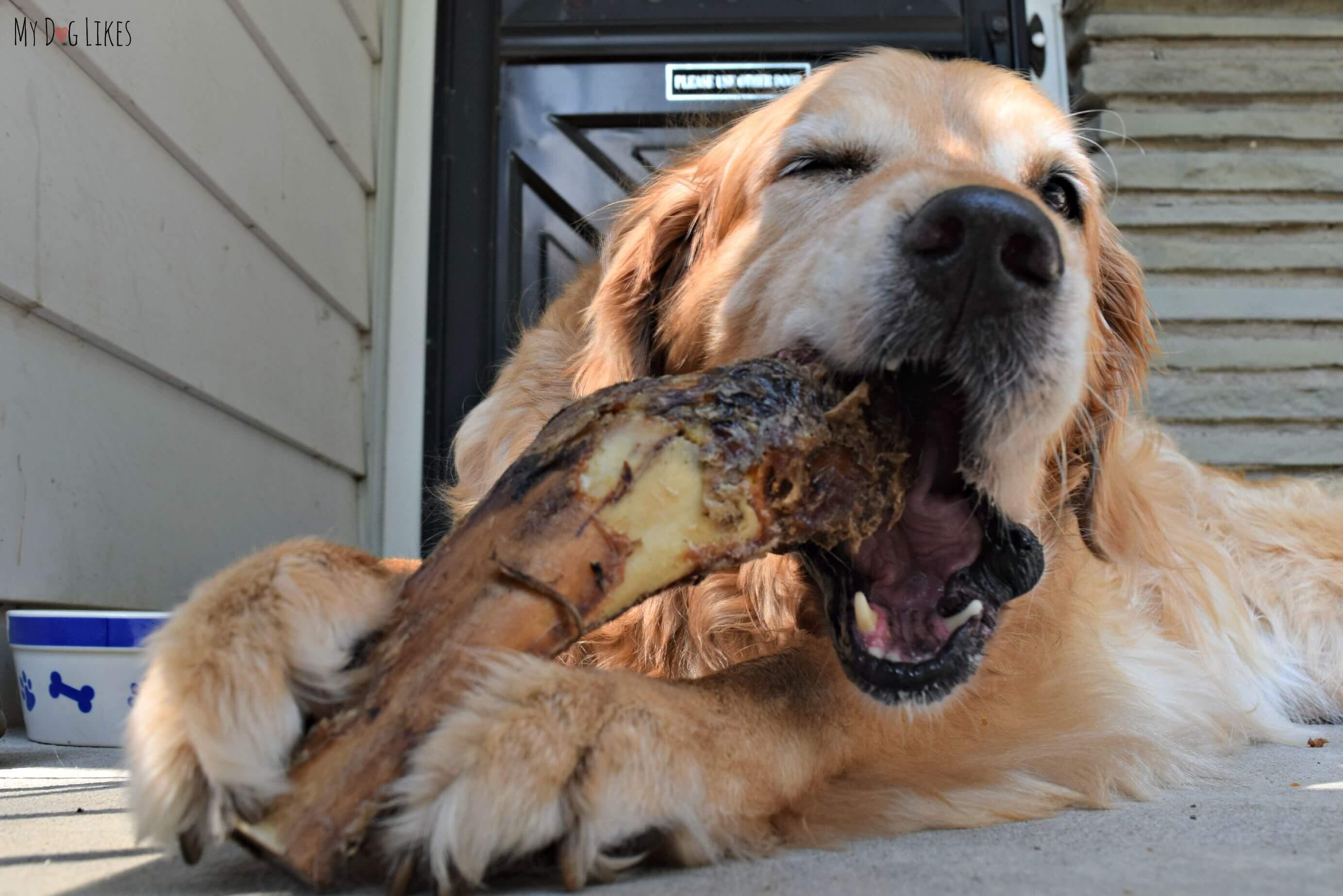 Can My Dog Eat Bones