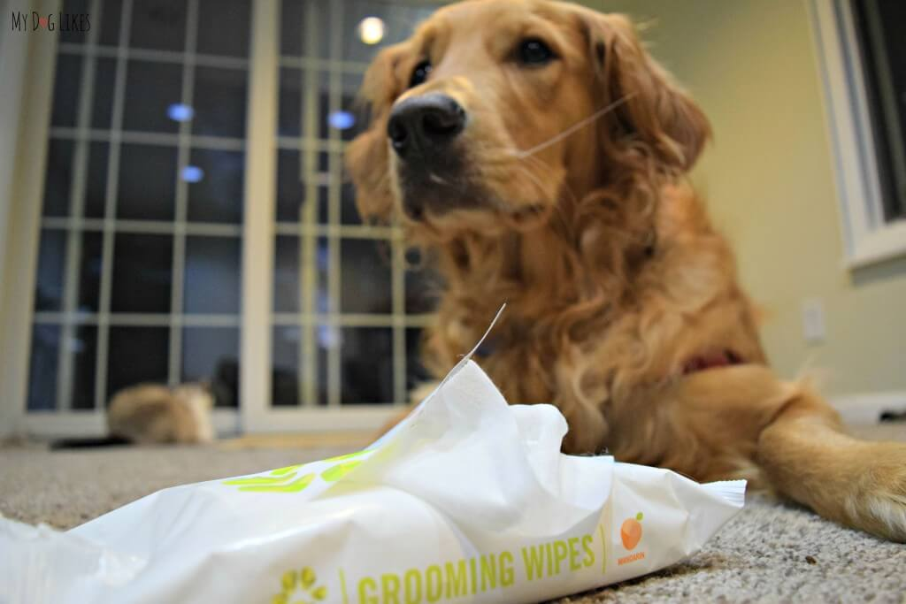 Using PL360's pet grooming wipes to keep Charlie smelling clean and fresh!