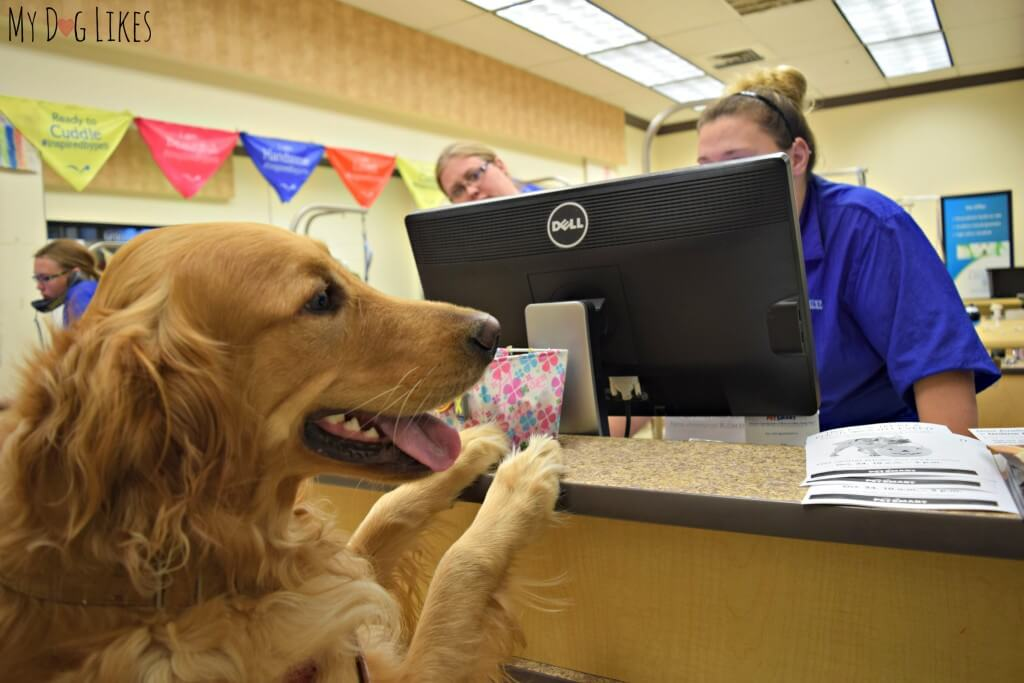 Looking for Dog Grooming Near Me? Did you know that PetSmart offers dog grooming services?