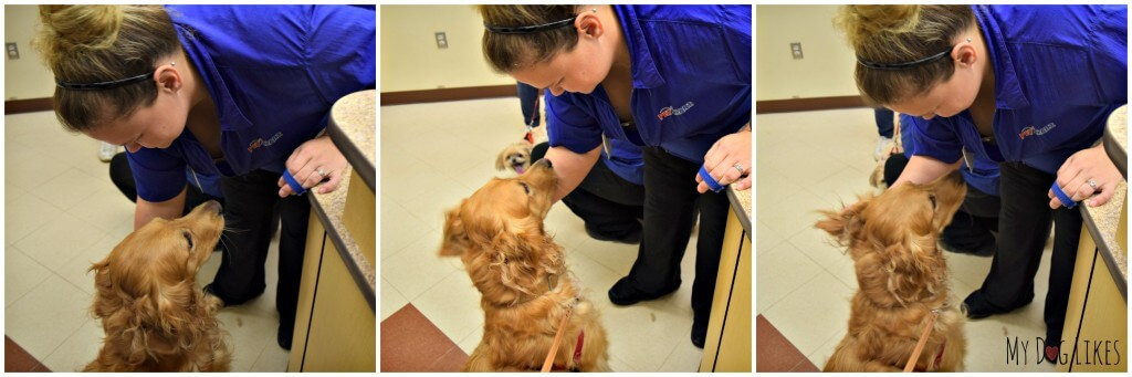 PetSmart groomers pass a rigorous round of training and testing before they can perform their duties.
