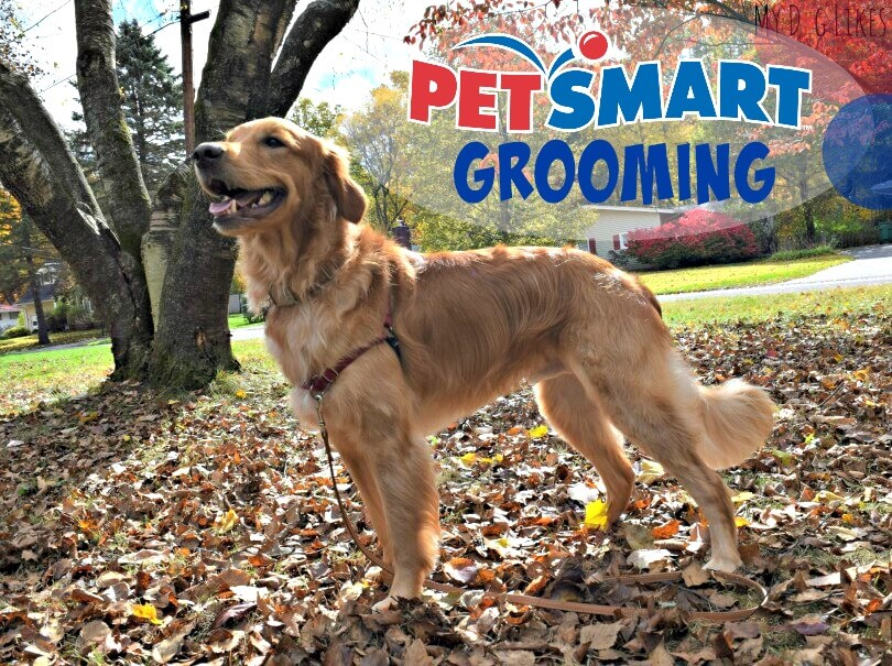 Petsmart Dog Grooming Training