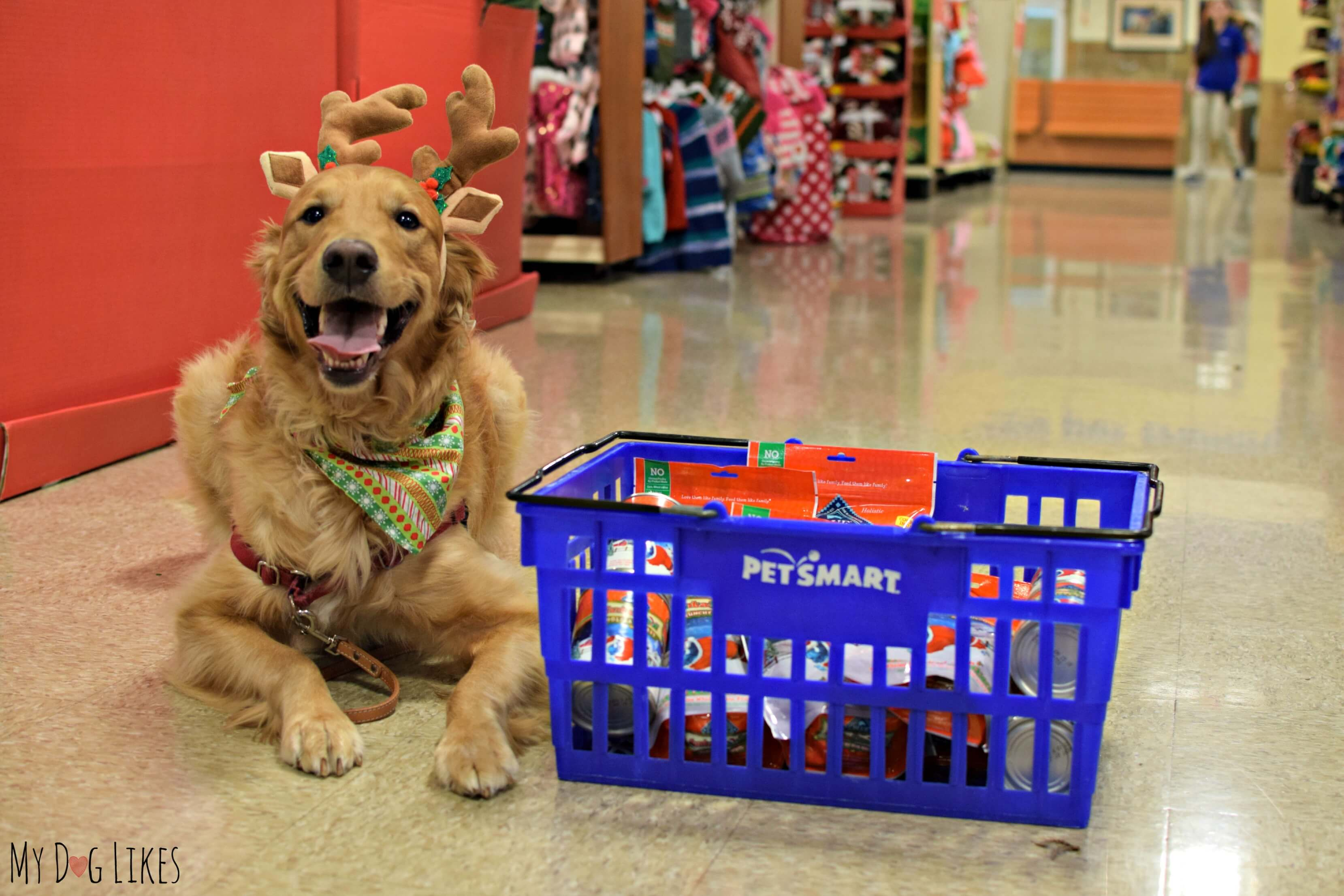 How Much Is Blue Dog Food At Petsmart