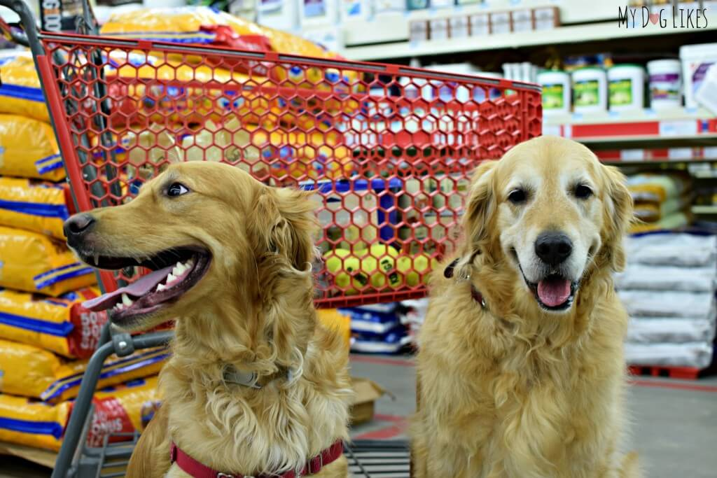 Harley and Charlie love shopping at Tractor Supply's dog friendly stores