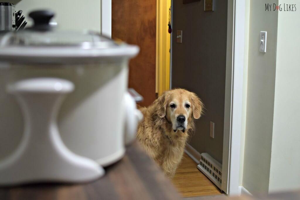 Making Homemade Dog Food In Bulk