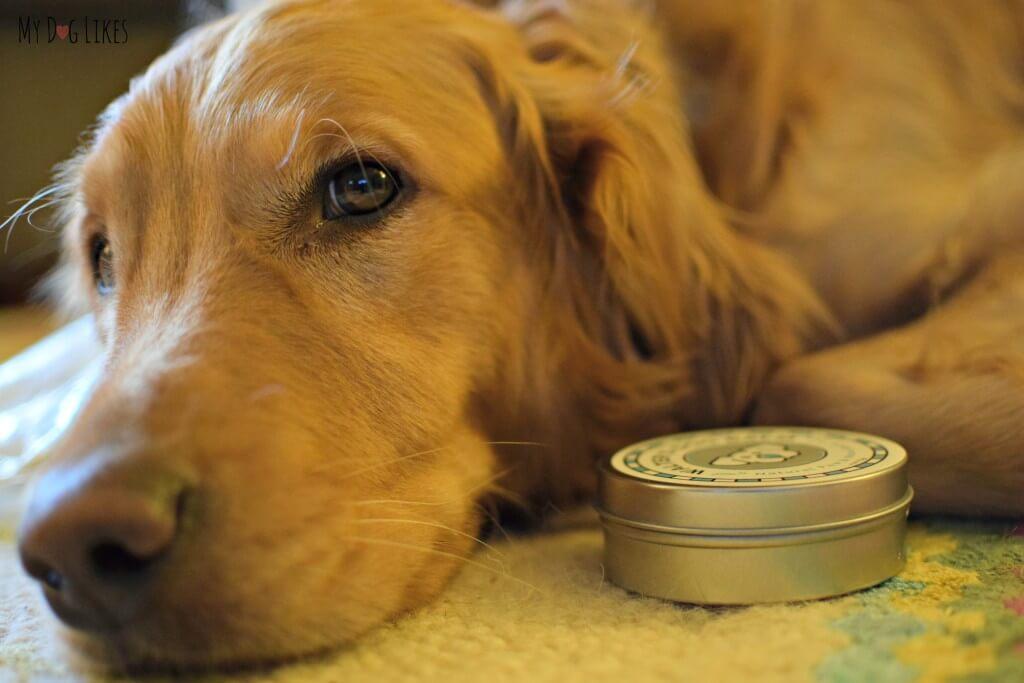 MyDogLikes reviews Walter's Dog Balm!