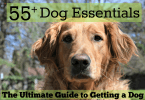 Getting a dog? Browse MyDogLikes Ultimate List of Dog Supplies!