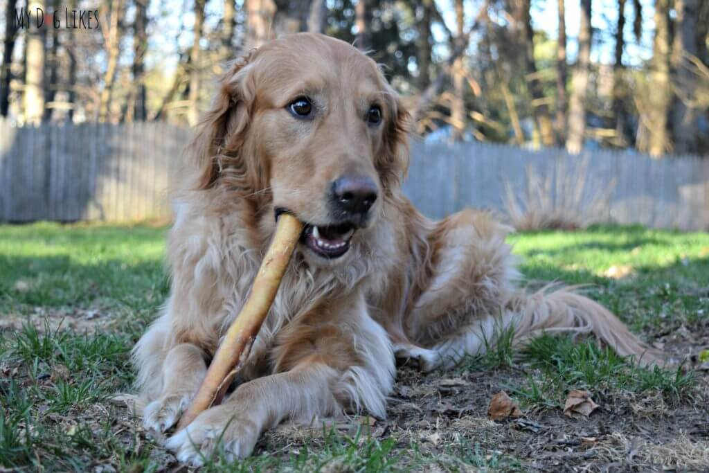 Bully Sticks for aggressive chewers from Best Bully Sticks