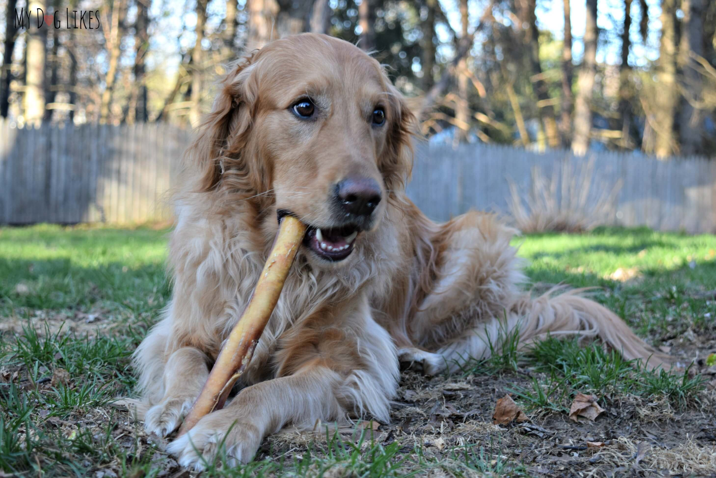 Single Ingre nt Treats and Chews from Best Bully Sticks