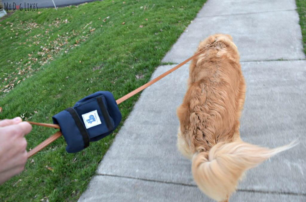 On a walk with the Turdlebag leash attachment.