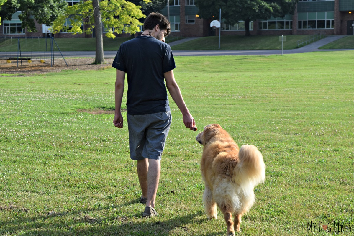 How To Train A Dog To Walk In A Leash