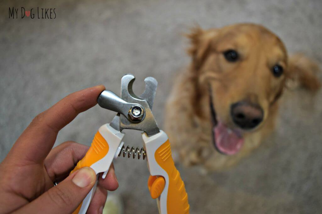 Image result for Dog Clippers And Clipping Your Dog Yourself