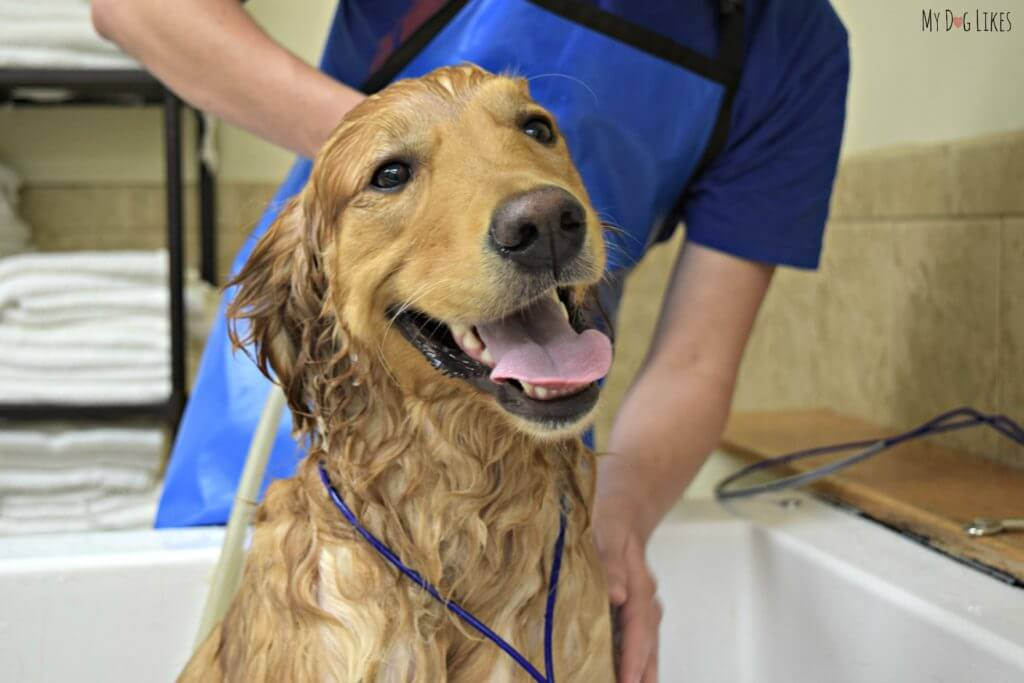 Happy at all times - even when getting a bath!