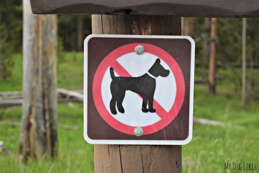 Dogs at Yellowstone National Park are prohibited on trails and boardwalks, but can still have an enjoyable experience.