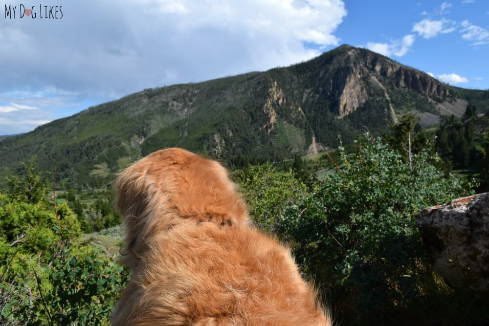 Harley at the Bunsen Peak overlook in Northwest Yellowstone