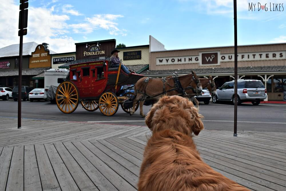 Exploring Jackson Hole, Wyoming with Dogs