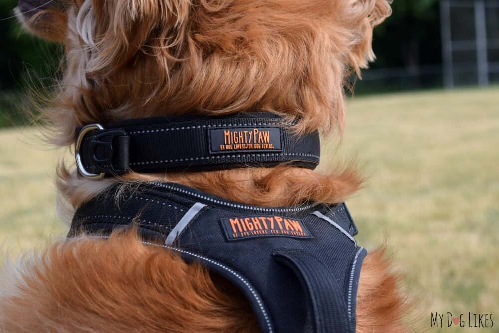 MightyPaw Dog Harness & Collar Review