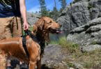 MightyPaw Dog Hiking Gear