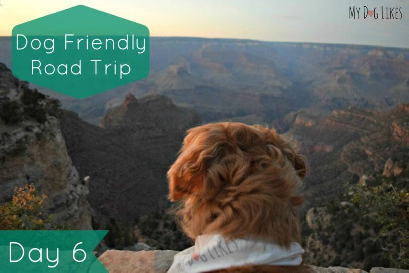 Is The Grand Canyon Dog Friendly