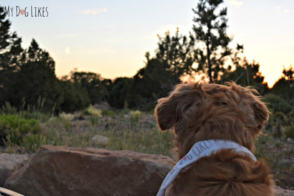 Dog Friendly Hikes Northern Arizona