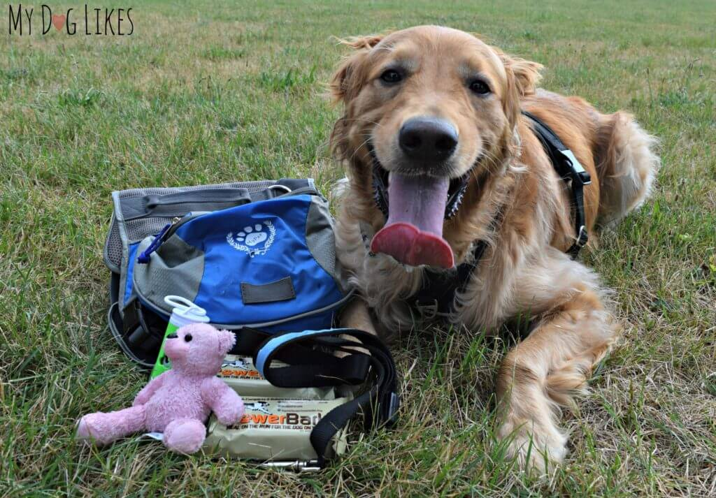 More Pet Emergency Supplies That Come Loaded In The Whywewag Bug Out Bag