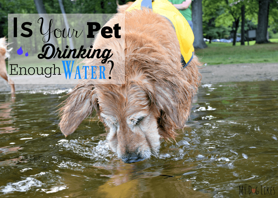 Pet Hydration Month - Is Your Pet Drinking Enough Water?