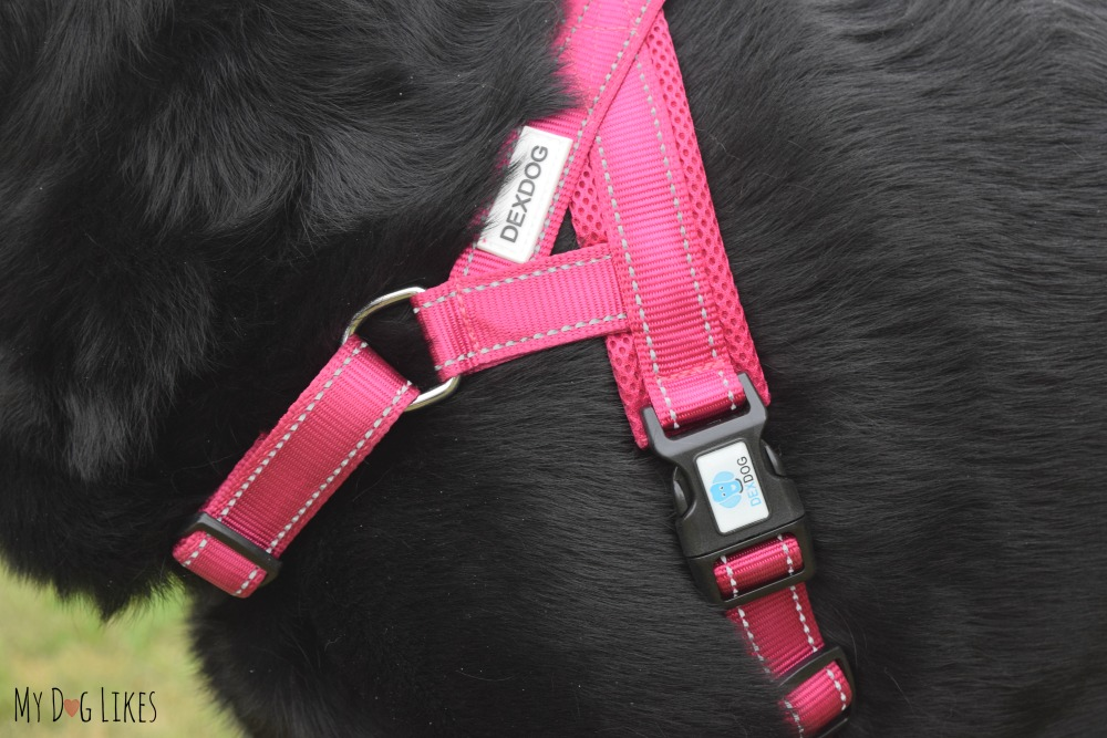 MyDogLikes DEXDOG Harness Review