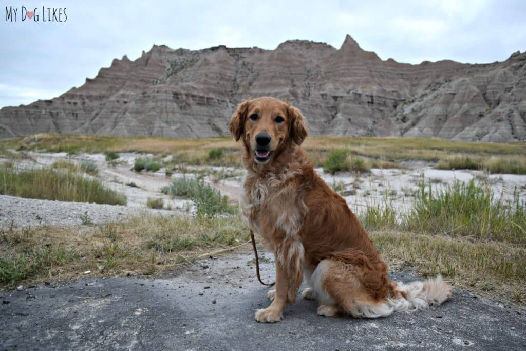 Dogs at Badlands National Park are only allowed near roads and not on trails.
