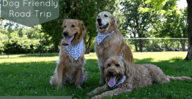 Dog Friendly Road Trip Days 13 & 14 - Headed Back Home