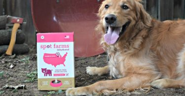 Dehydrated Dog Food Review