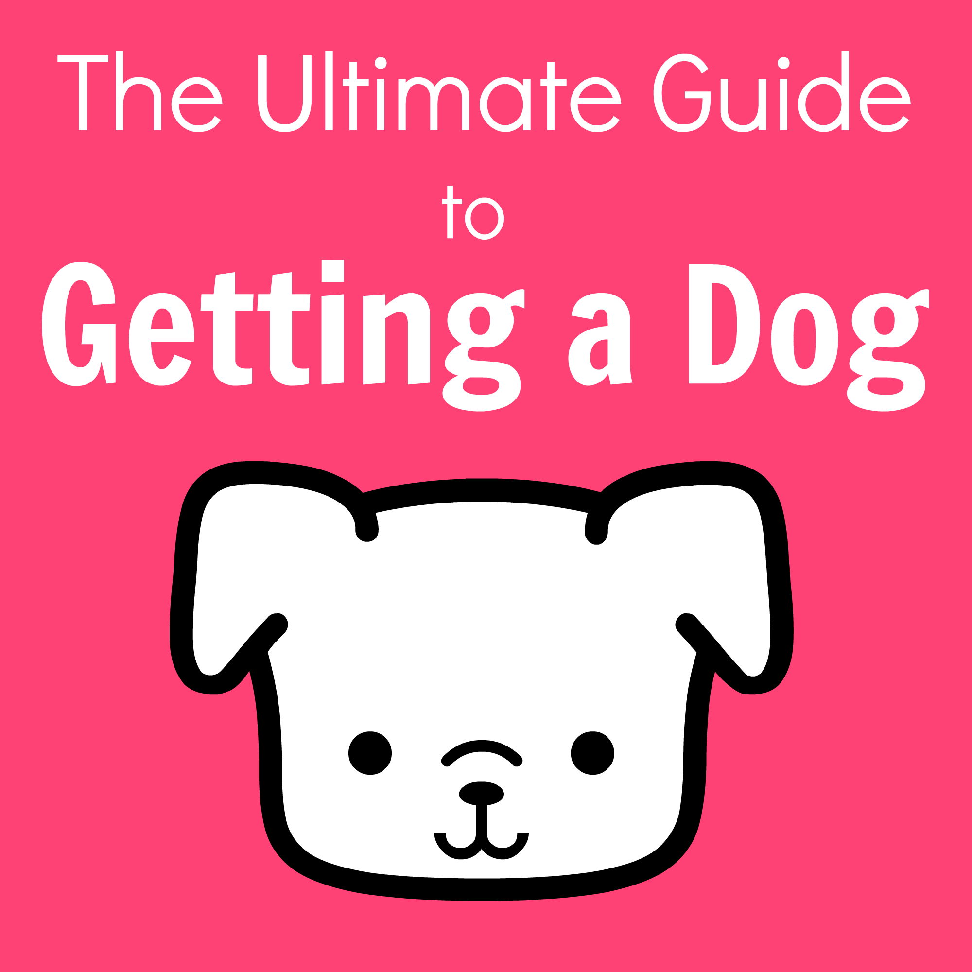 The Ultimate Guide to Getting a Dog