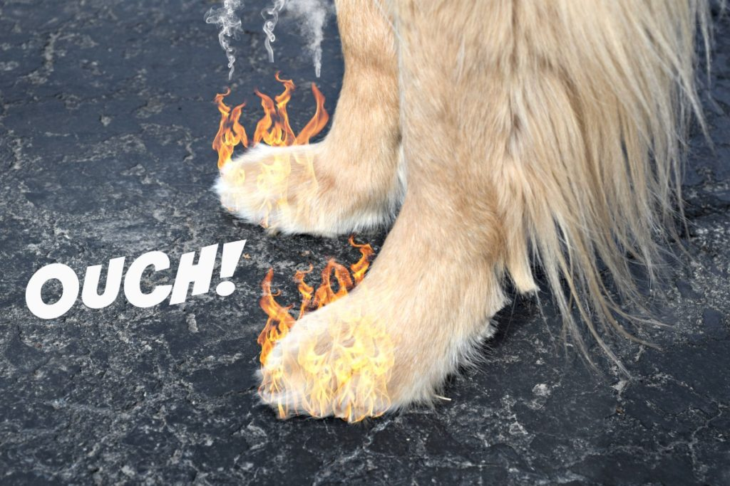 Hot pavement can be extremely dangerous to dogs paws.