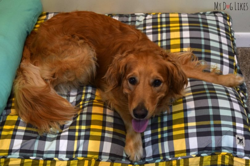 molly mutt duvet dog bed review - stylish & eco-friendly