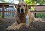 paraben-free-dog-shampoo