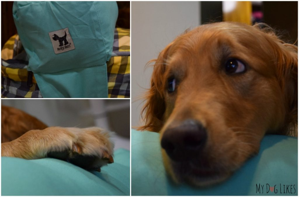 Molly Mutt Duvet Dog Bed Review Stylish Amp Eco Friendly