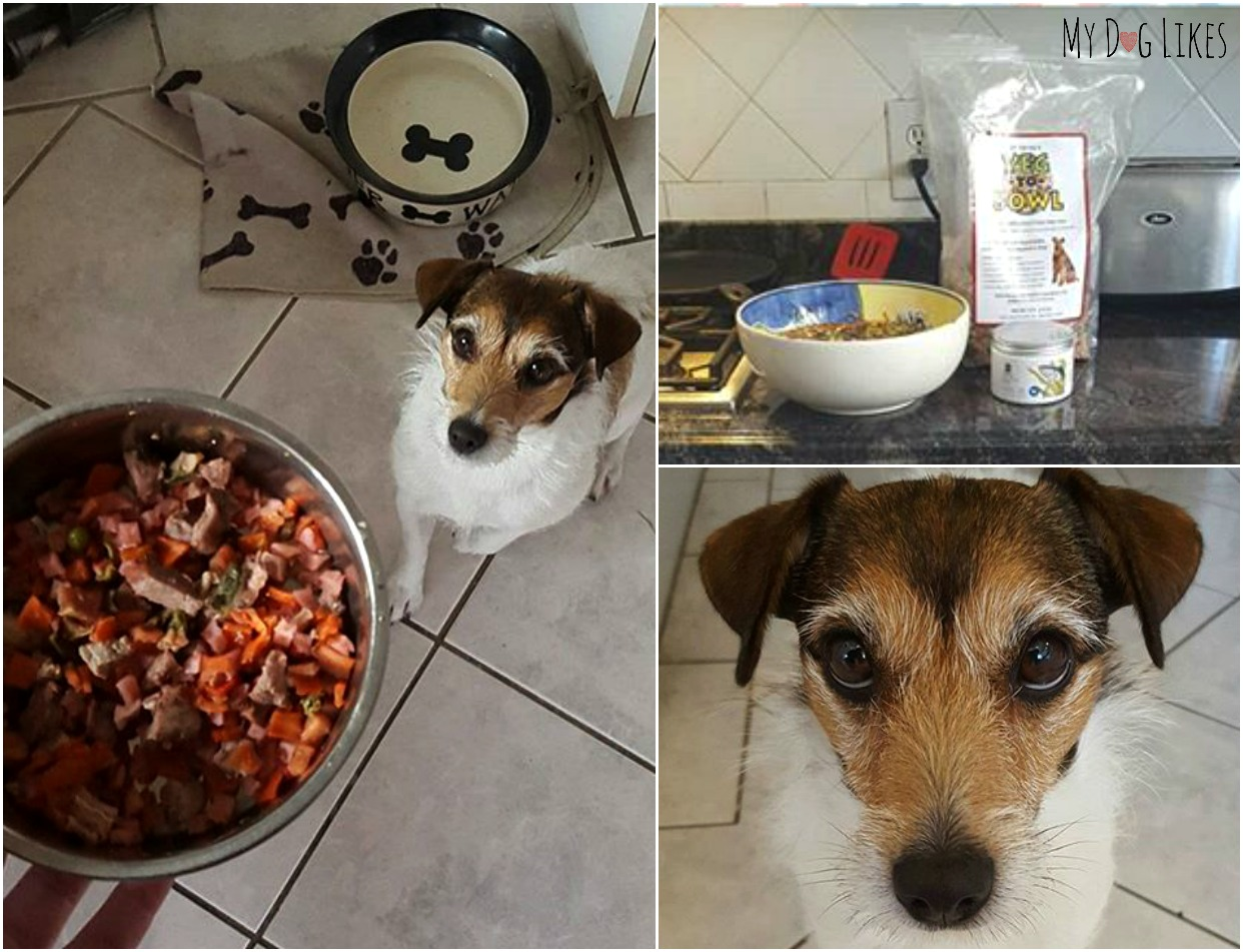 Making Dog Food With Ground Beef