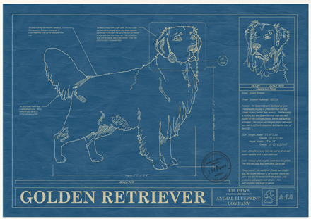 golden-retriever-blueprint