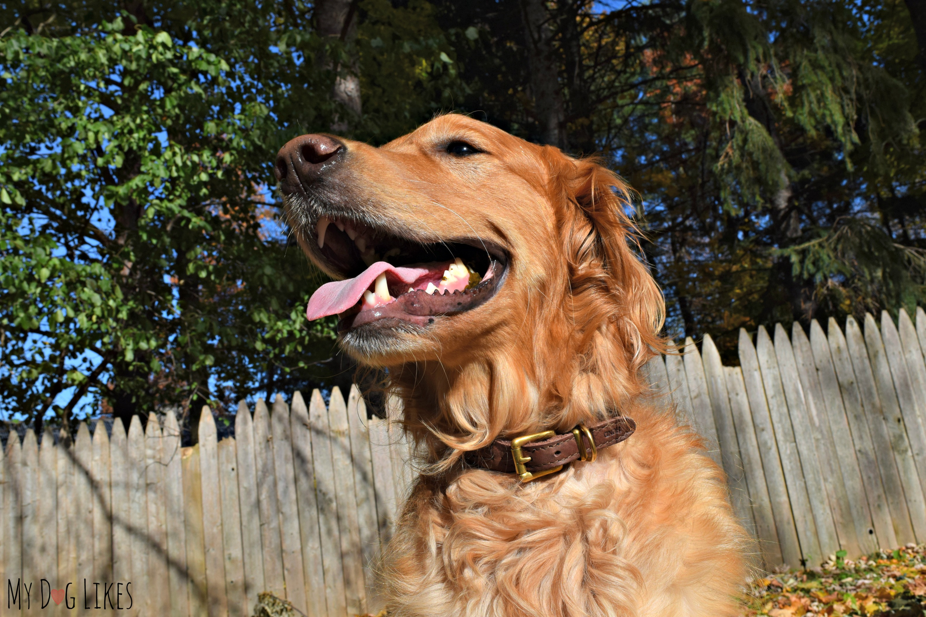 HUND Denmark Review - Eco Friendly Leather Collars and Leashes