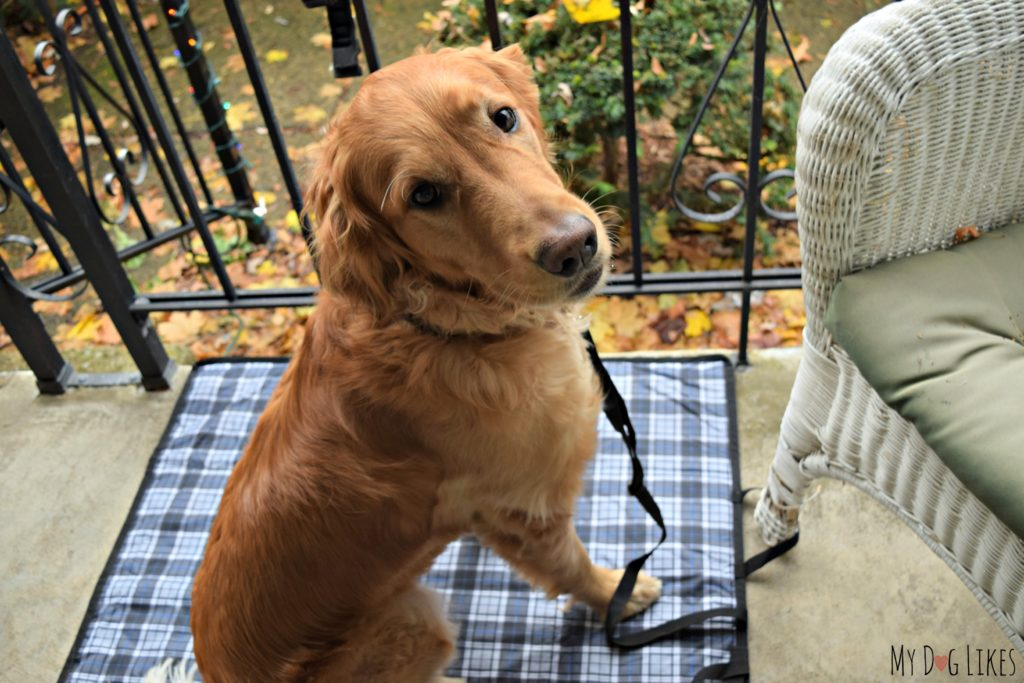 The Out and About Mat can be conveniently attached to a chair leg to keep your dog right by your side.