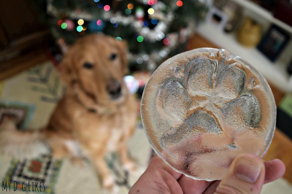 A glass paw print makes for a truly unique gift for any dog lover and a one-of-a-kind dog keepsake.
