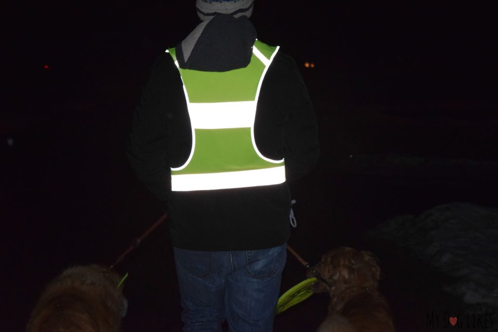 Reviewing EvoLink's reflective vest for dog walking