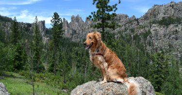 Posing in front of Cathedral Spires while visiting Custer State Park with Dogs