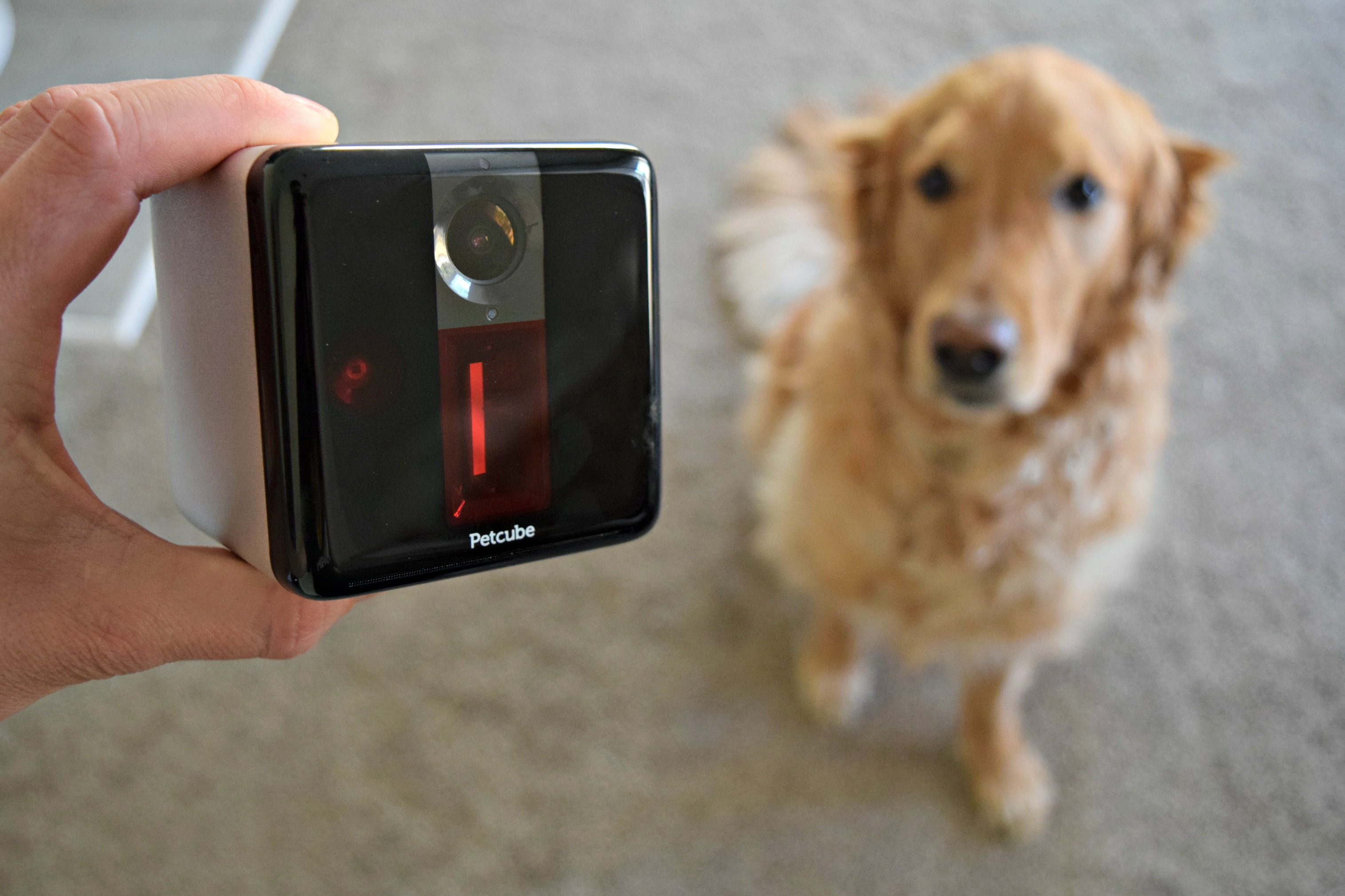 Petcube Review - Interacting With Your Pets When You're Not at Home!