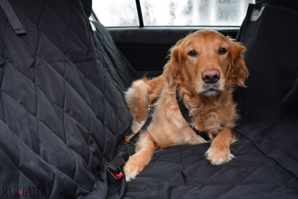 Demonstrating The Hammock Orientation Of Plush Paws Car Seat Cover