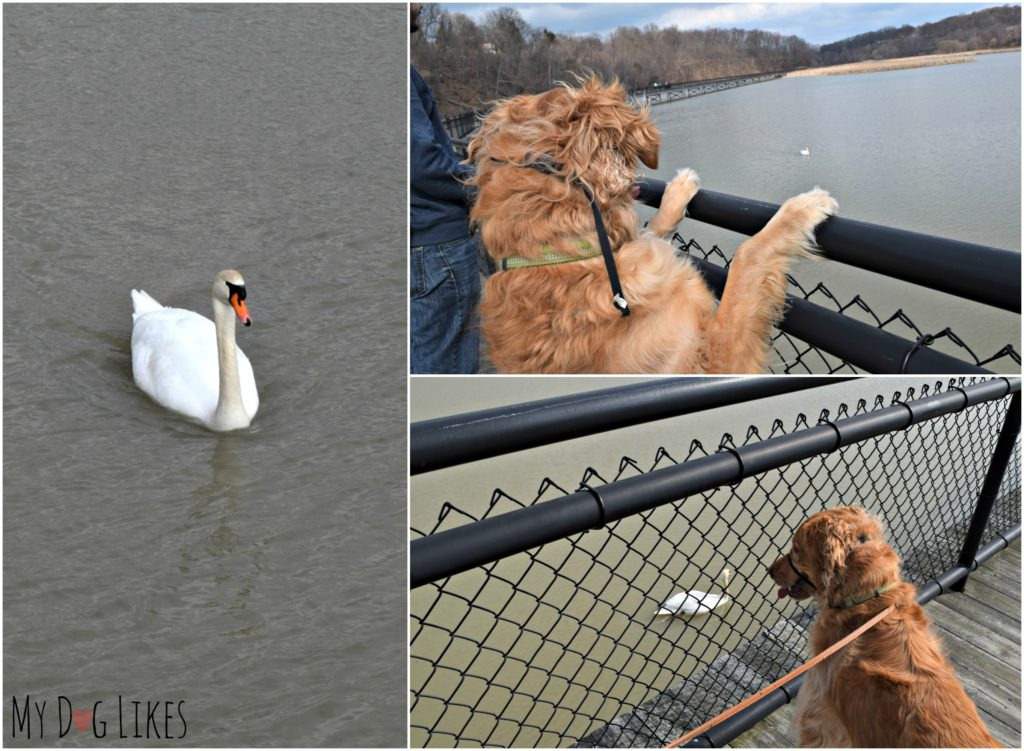 Waterfowl abounds at Turning Point Park
